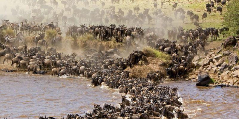 kenya migration