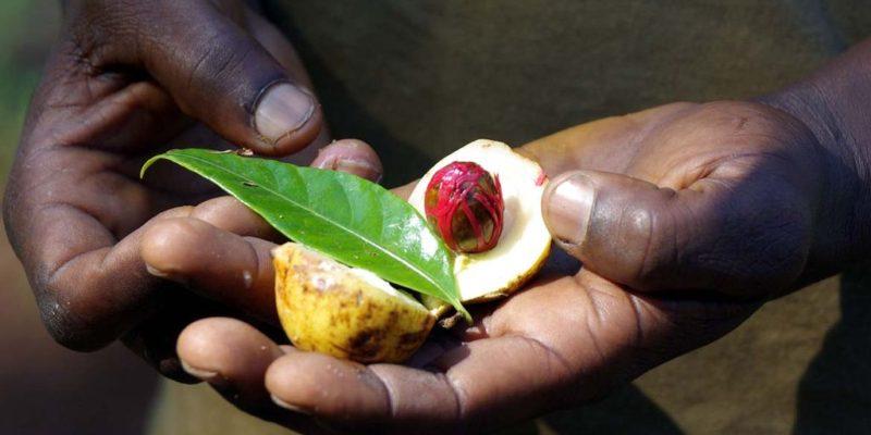 Spices - Zanzibar